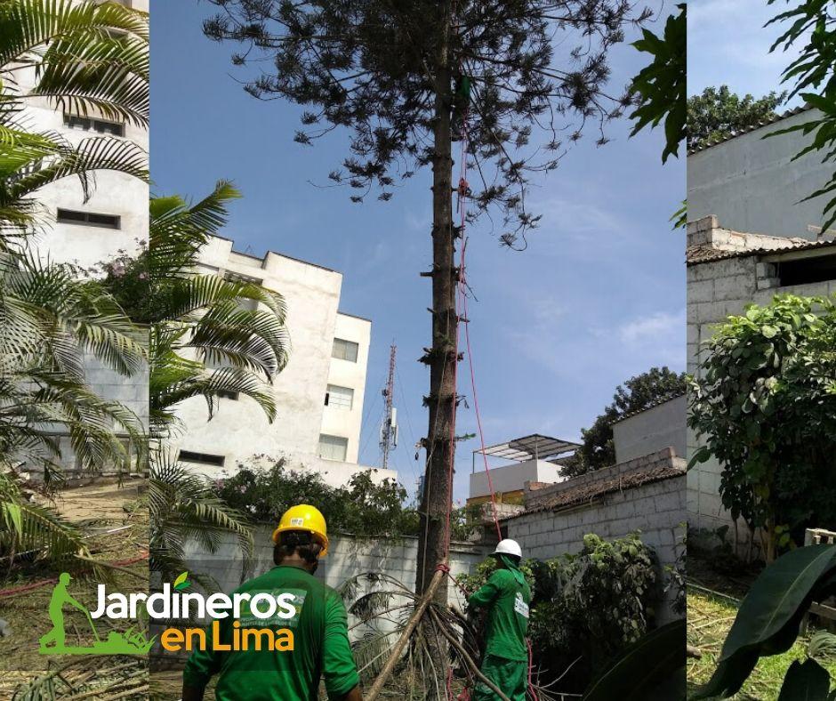 Servicio de poda y tala de árbol