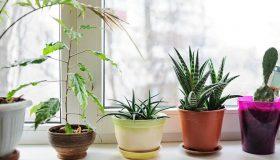 Como abonar plantas en maceta